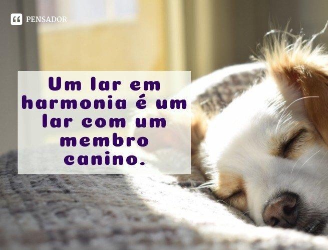 Um lar em harmonia é um lar com um membro canino.