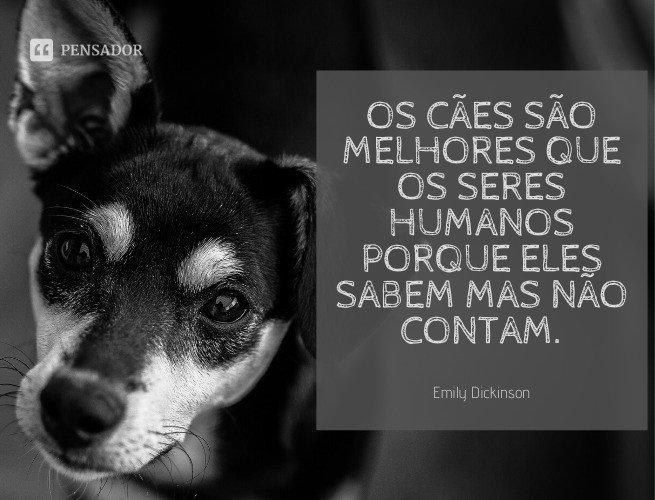Os cães são melhores que os seres humanos porque eles sabem mas não contam.  Emily Dickinson