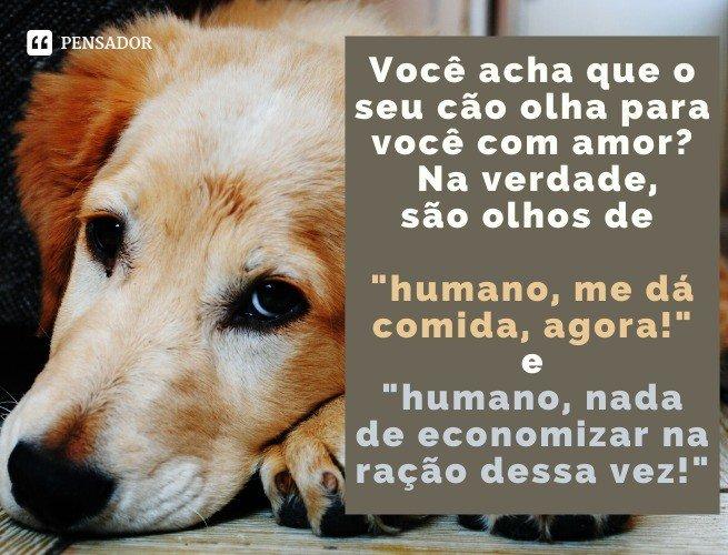 Você acha que o seu cão olha para você com amor? Na verdade, são olhos de 'humano, me dá comida, agora!' e 'humano, nada de economizar na ração dessa vez!'