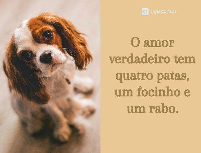 O amor verdadeiro tem quatro patas, um focinho e um rabo.