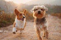 80 legendas perfeitas para fotos com cachorro: das fofas às engraçadas