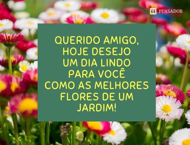 Querido amigo, hoje desejo um dia lindo para você como as melhores flores de um jardim!