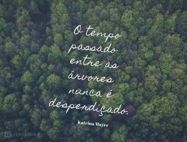 25 Frases Sobre A Natureza Para Celebrar O Dia Da Amazônia