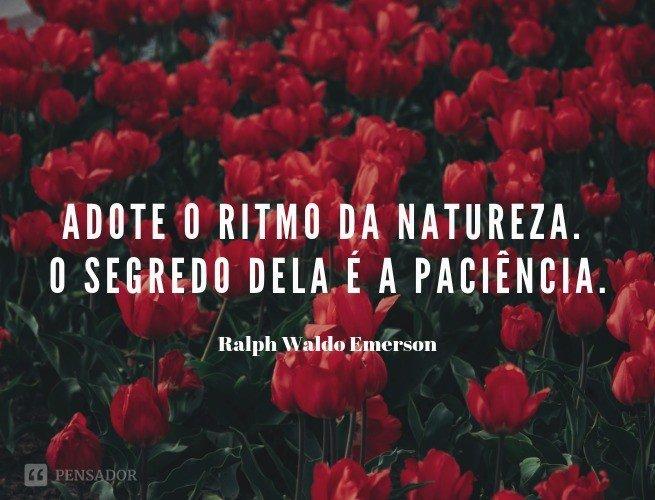 Adote o ritmo da natureza. O segredo dela é a paciência.