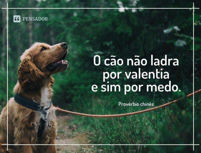 O cão não ladra por valentia e sim por medo.